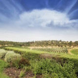 digital-marketing-case-study-Malhadinha-Nova-wineyards